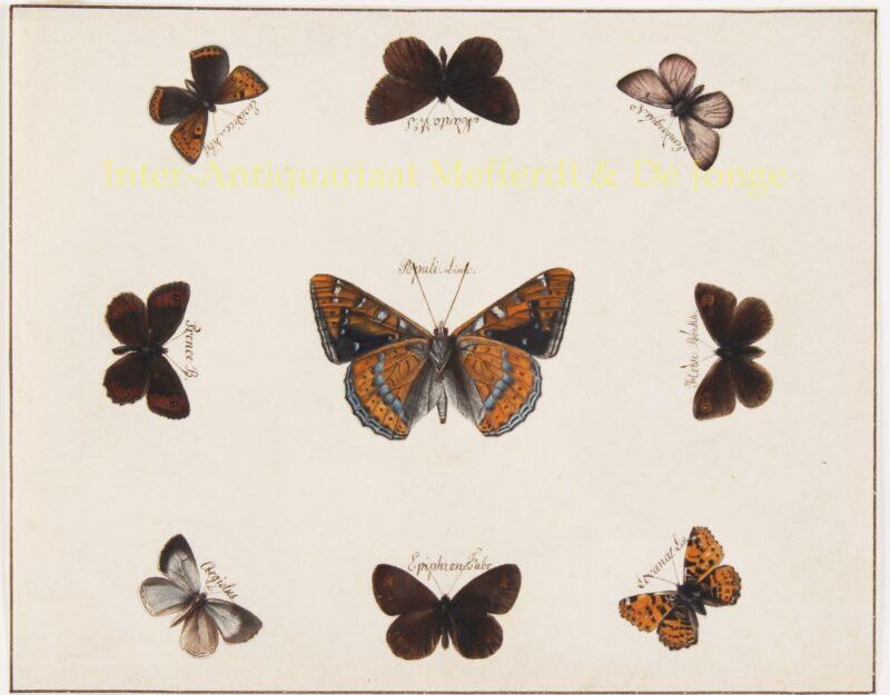 vlindertekeningen – 19de eeuw