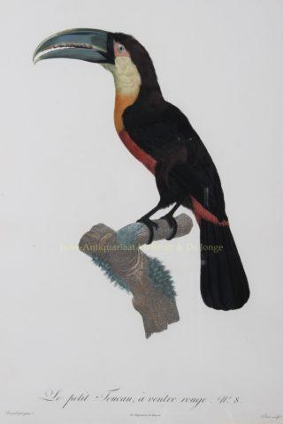 Toucan – after Jacques Barraband, 1801-06