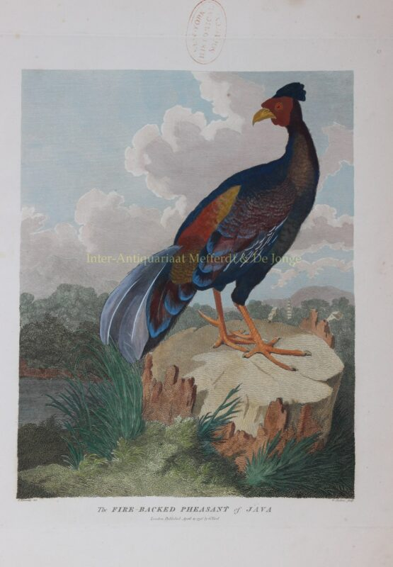 Pheasant of Java – after William Alexander, 1796