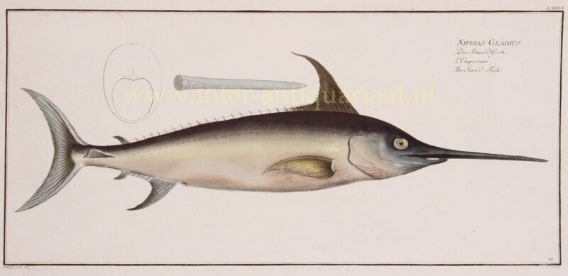 Zwaardvis – Markus Elieser Bloch, 1782-1795