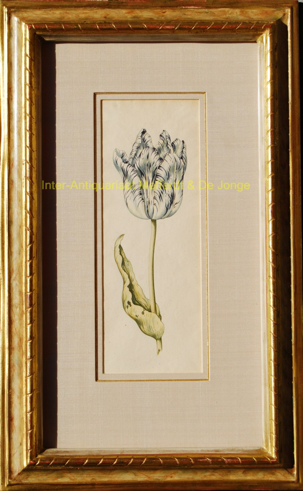 Anonymous - tulips antique watercolours
