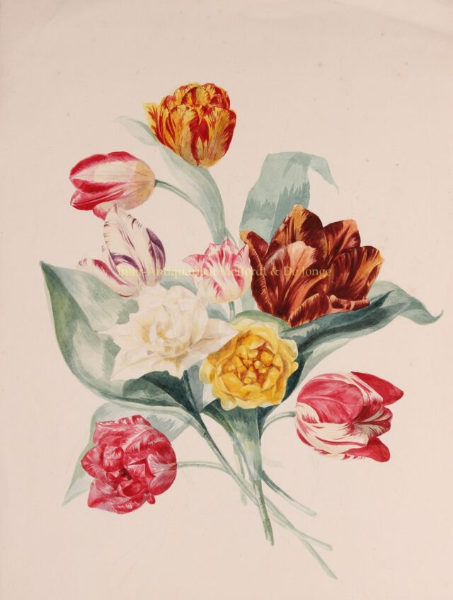 1e-eeuwse aquarel tulpen