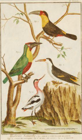 Exotische vogels uit Encyclopedie de Diderot et d'Alembert – 1751-1777