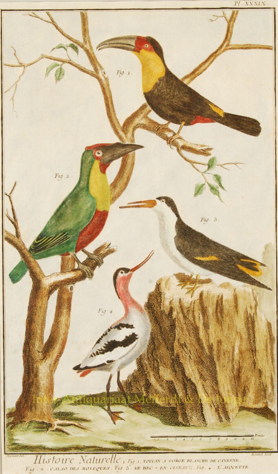 Exotische vogels uit Encyclopedie de Diderot et d'Alembert - 1751-1777