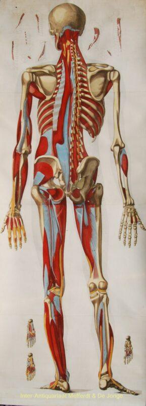 Van geneeskunst naar geneeskunde – antieke kopergravure